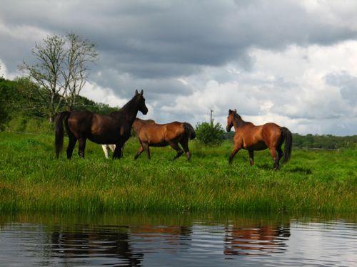 horses loch oughter
