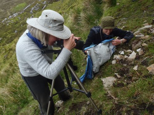 recording the starry saxifrage