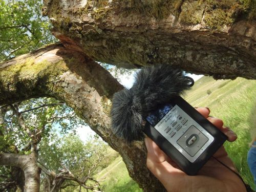 audioing trees