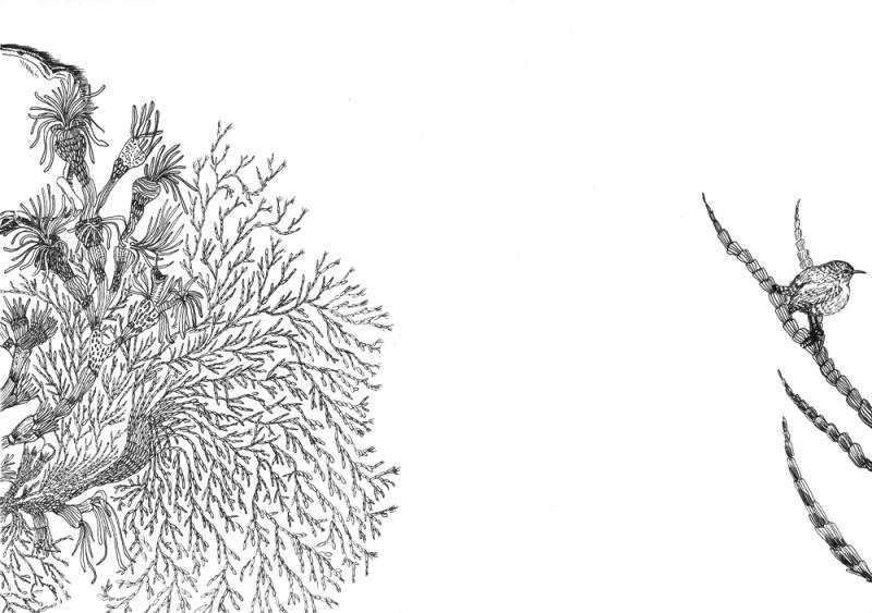 Coral & Wren